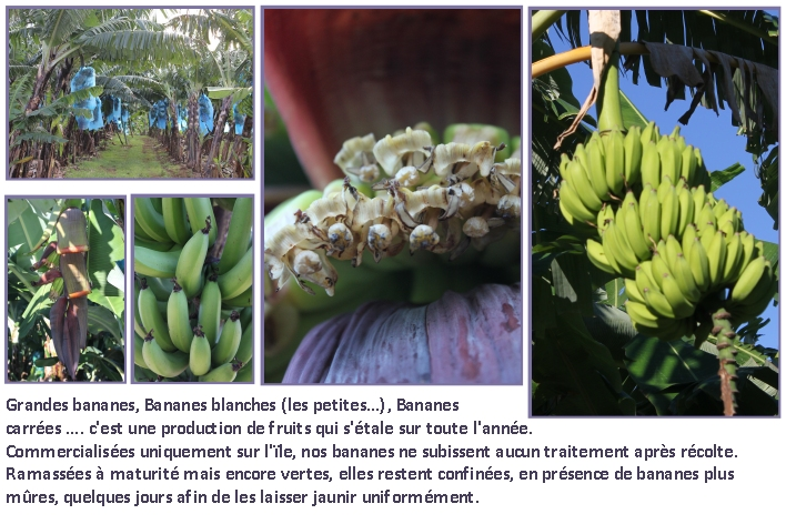 diapo fruits bananes
