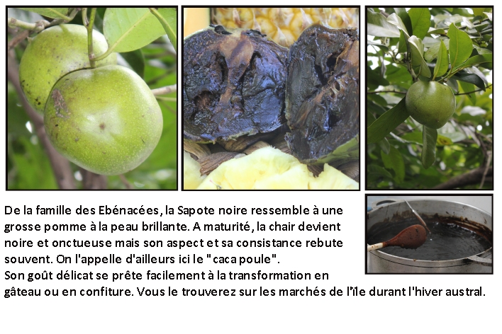 diapo fruits sapotes